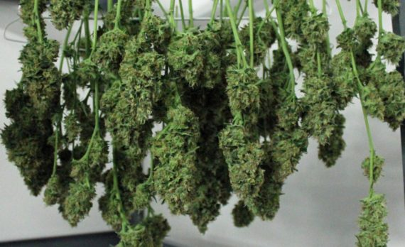 5-tips-marijuana-industry-600x375