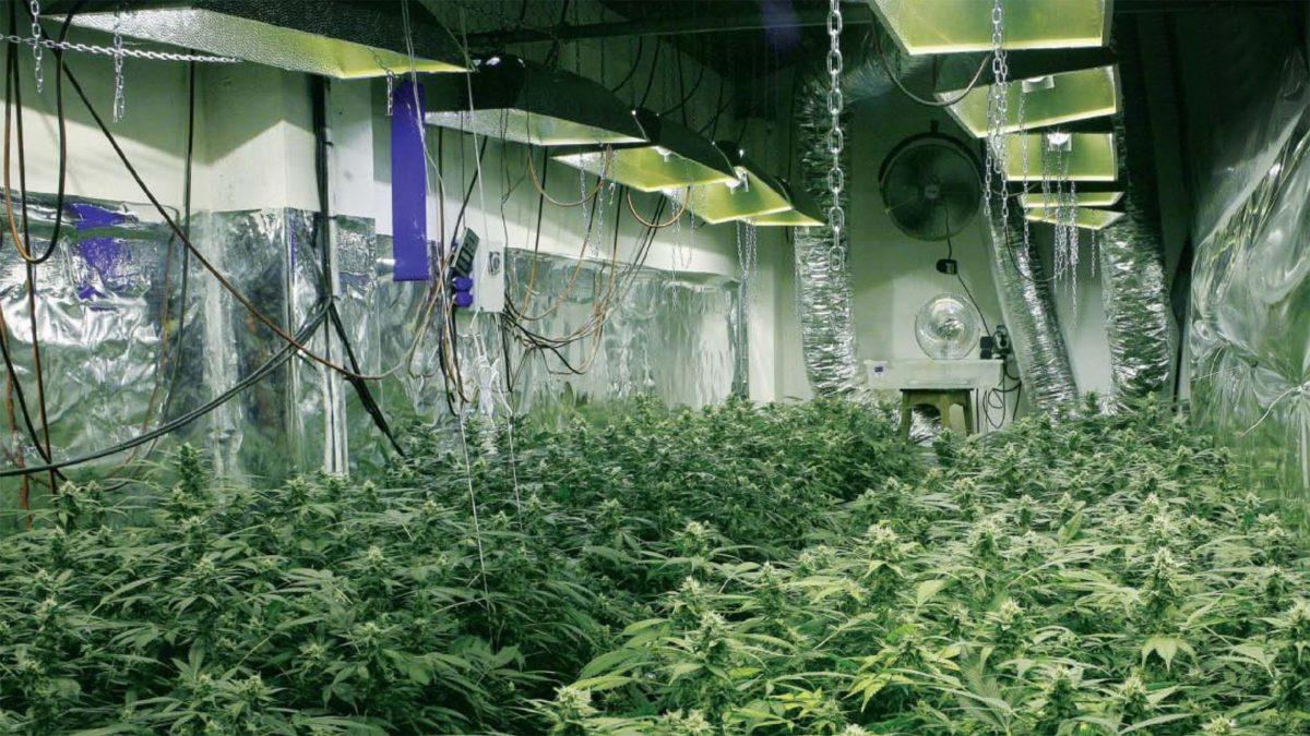 Вентиляция помещения для конопли куплю марихуану омск