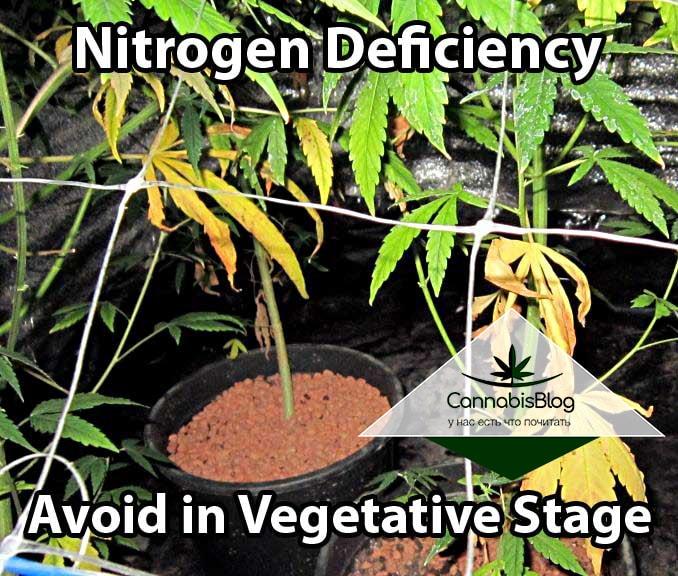Нехватка азота при вегетации