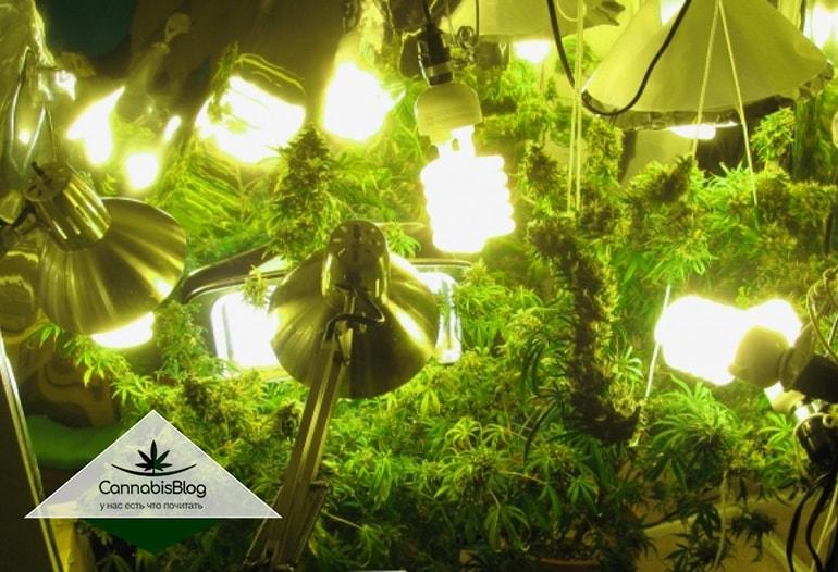 Усилить освещение для увеличения урожая