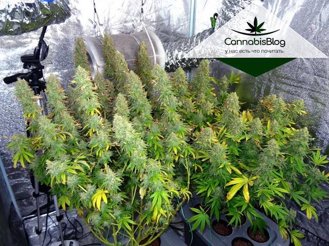 Организация правильного освещения для растений