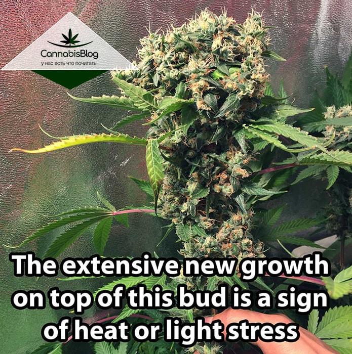 Растение страдает от жары