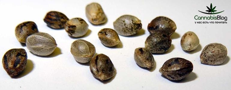 Семена которые дали женские растения