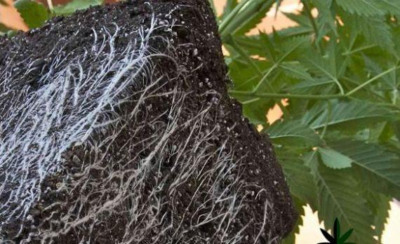 Кокосовое волокно для грова каннабиса