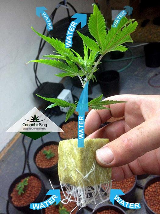 Движение воды по растению