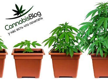 Почему одно растение развивается медленнее остальных