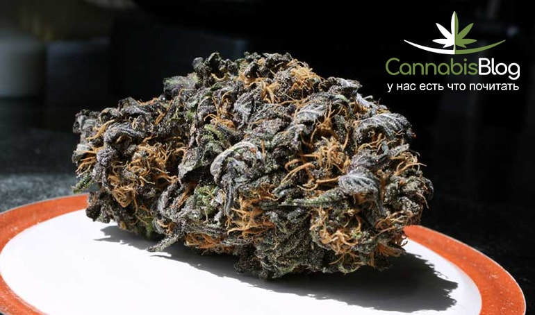 how to grow pink or purple cannabis buds grow weed easy