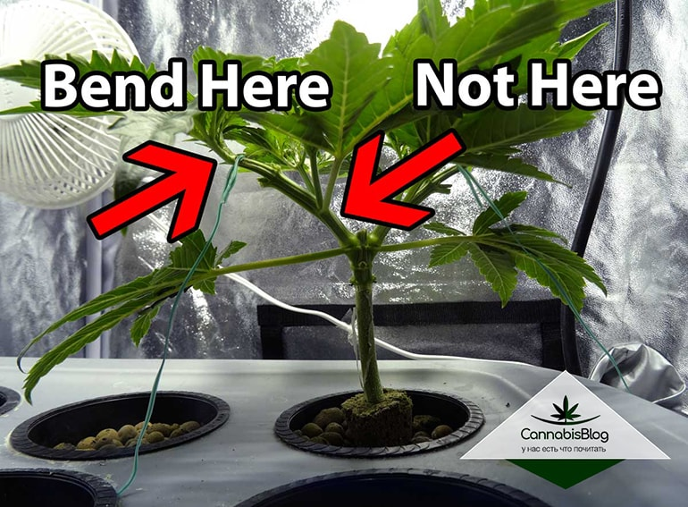 Правильно сгибайте растения