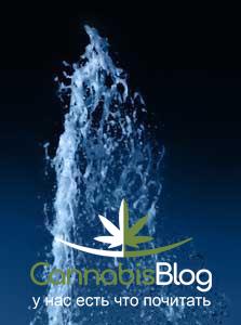 Промывка корней марихуаны