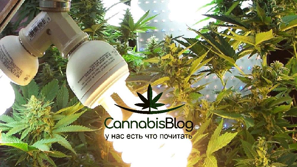 Как подобрать освещение для марихуаны