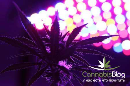 LED лампы для марихуаны