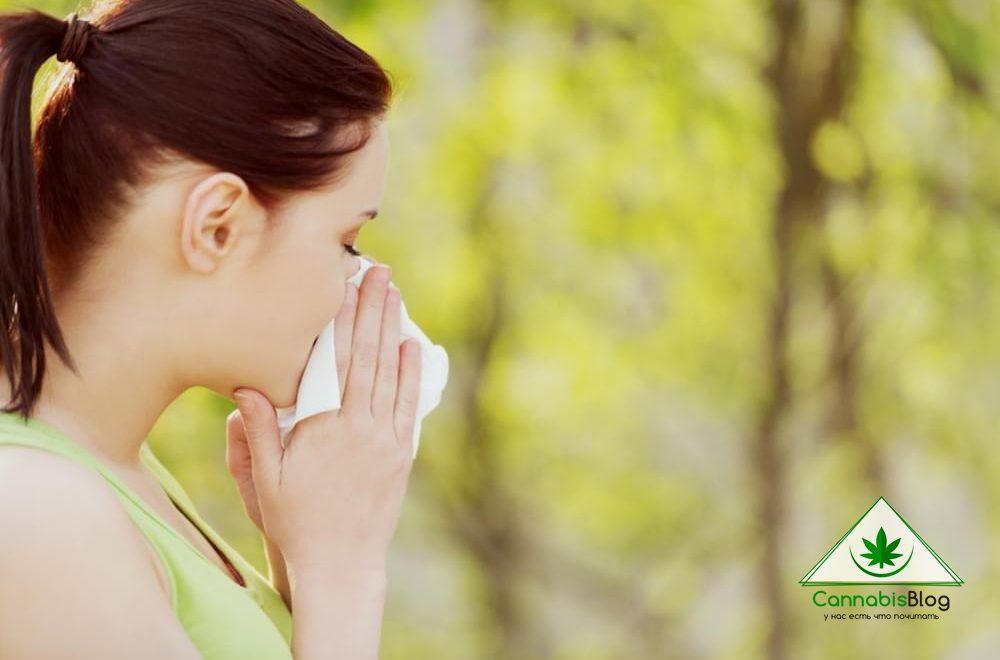 Как определить аллергию на коноплю