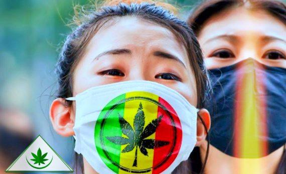 медицинская марихуана в Китае
