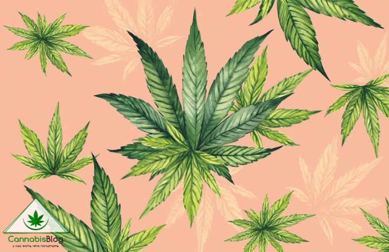 легальная марихуана в европе, где можно курить каннабис?