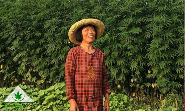 лечебная марихуана в Китае