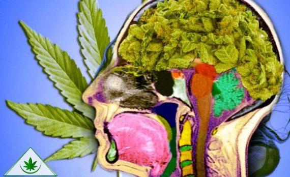 марихуана и память