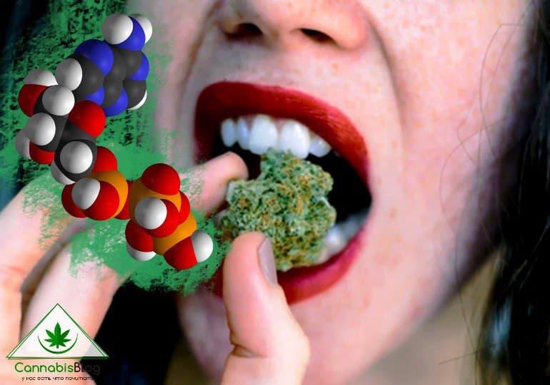 каннабис и выработка гормонов