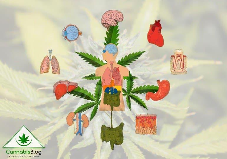 действие марихуаны на организм