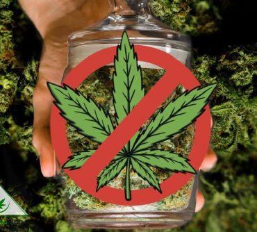 запрет марихуаны: кому это выгодно?