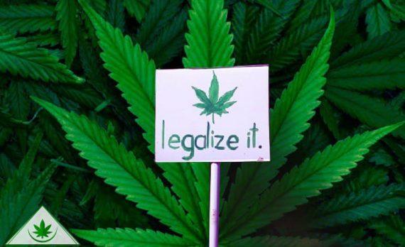 как поддержать легализацию марихуаны?