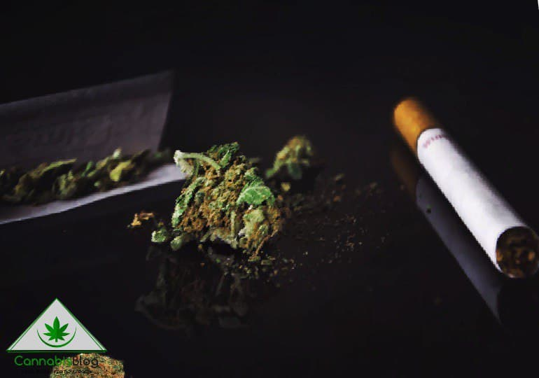 марихуана или табак
