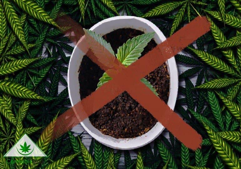кто против легализации марихуаны