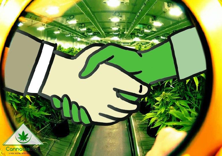 марихуана в первый раз