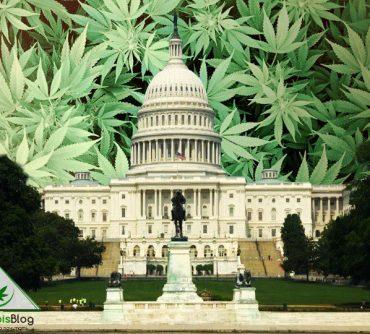 легализация марихуаны в США
