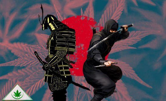 марихуана ниндзя самурай